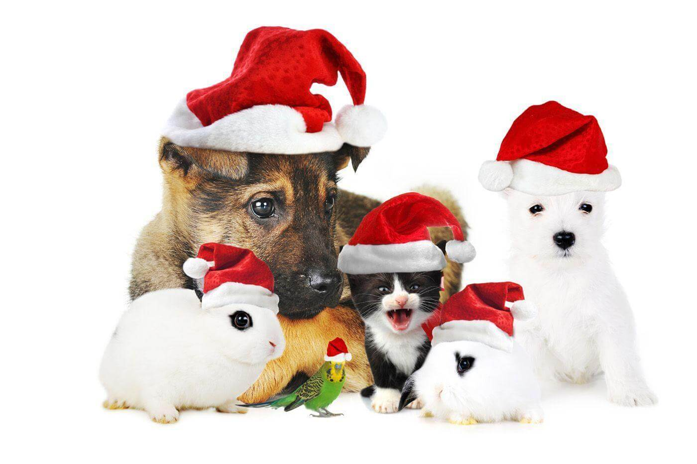 Christmas pet wallpaper